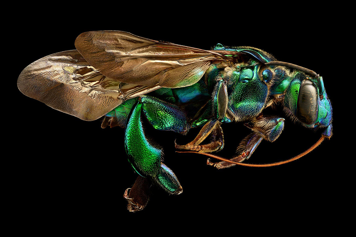 Microsculpture: Incredibly Detailed Macro Insect