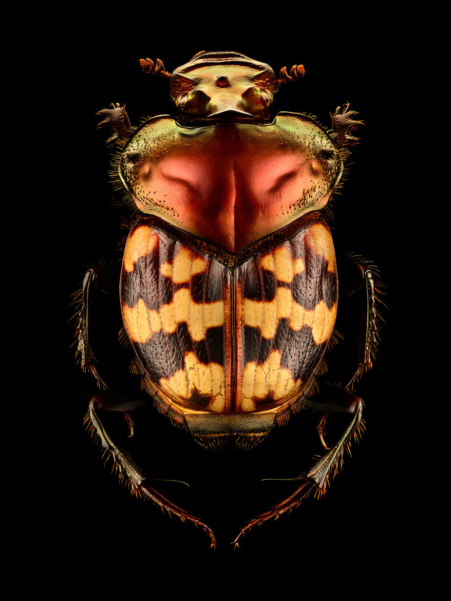 microsculpture macro photos insects