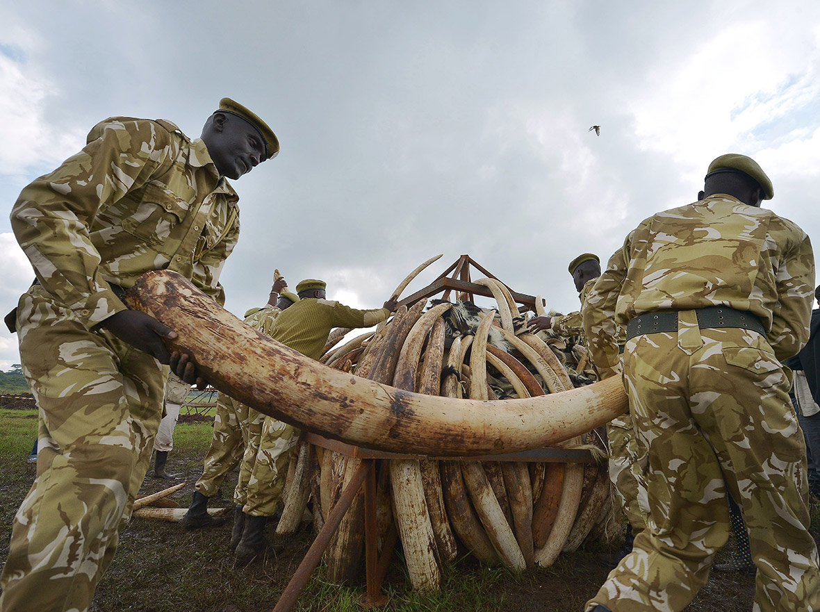 Tanzania auctions off 3.5 tonnes of teeth from vulnerable hippos