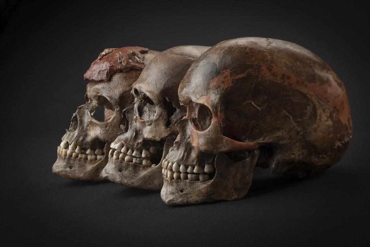 ancient european dna