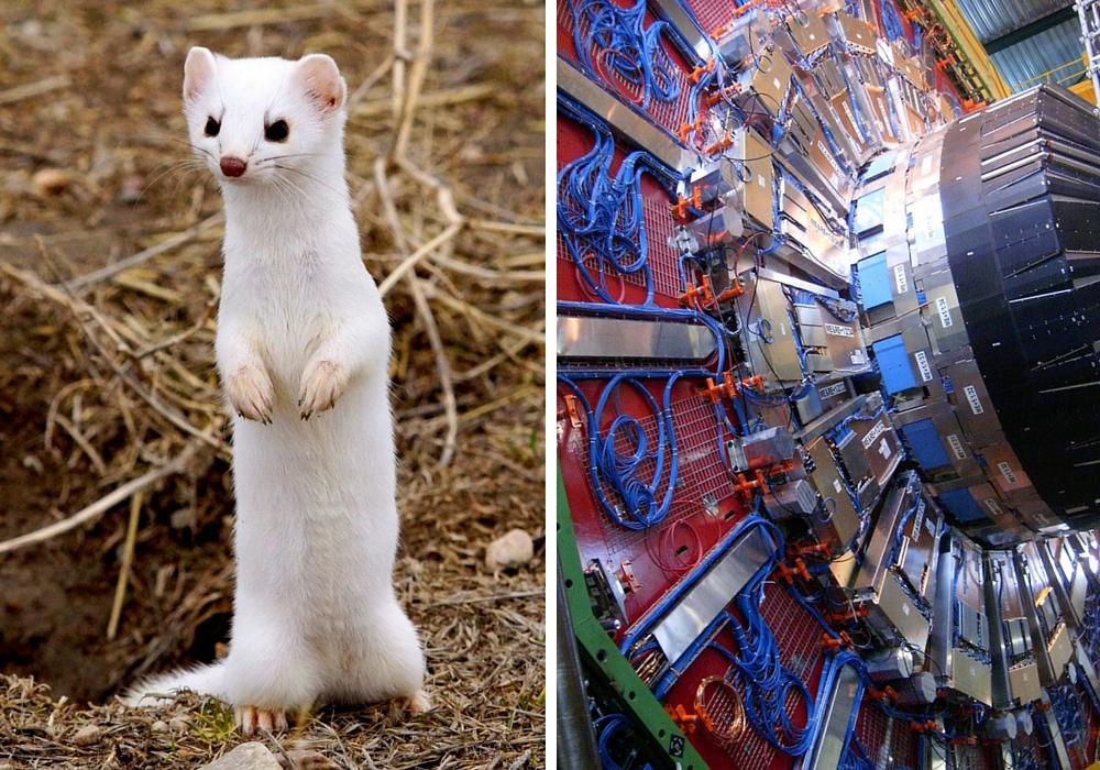 Weasel CERN