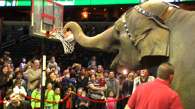 Elephants at the Ringling Bros. and Barnum & Bailey Circus finally retired