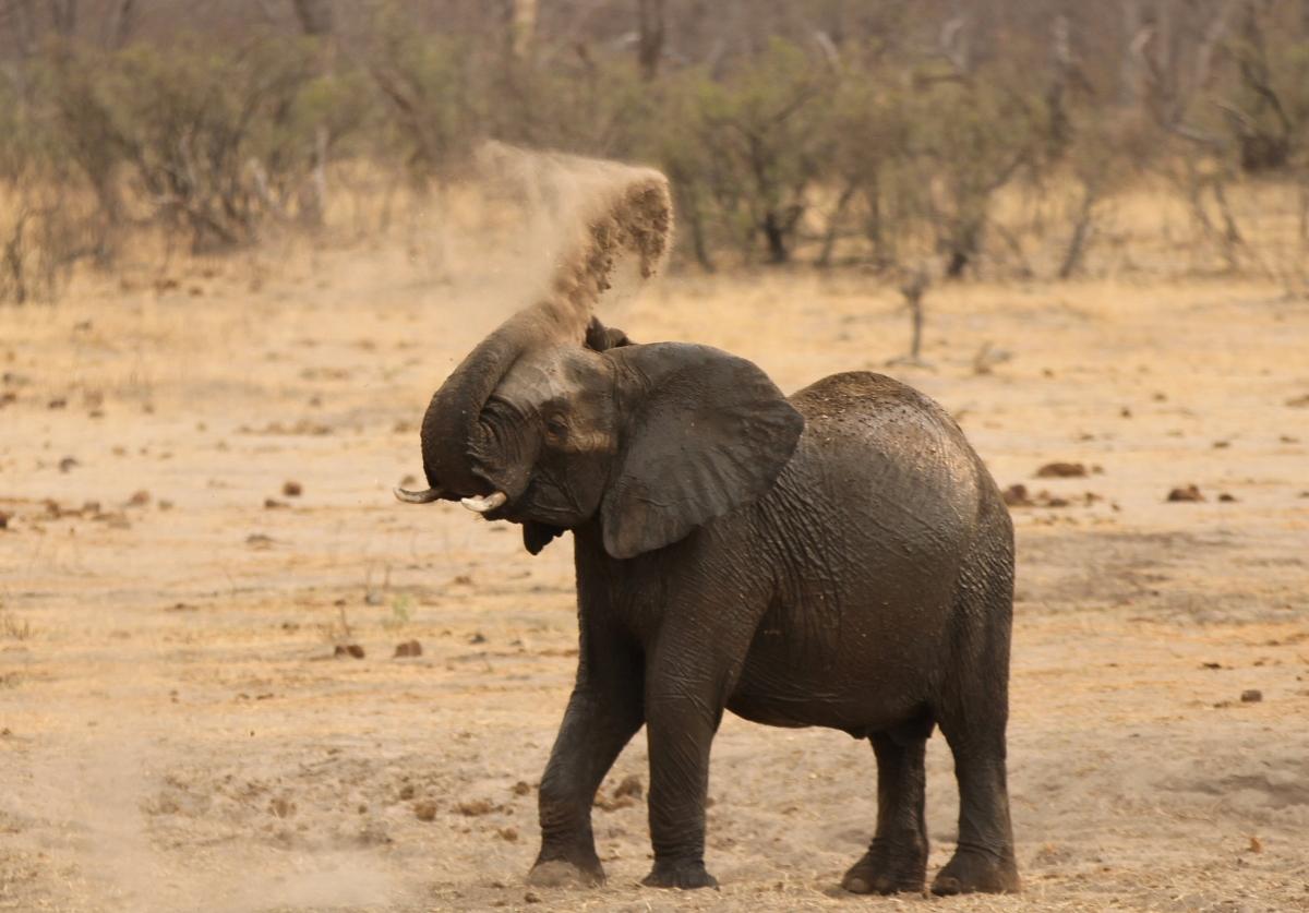 Zimbawe wild animals