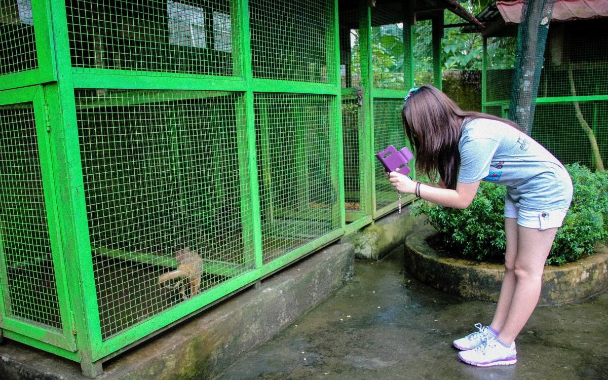 Tourist takes picture of a caged civet