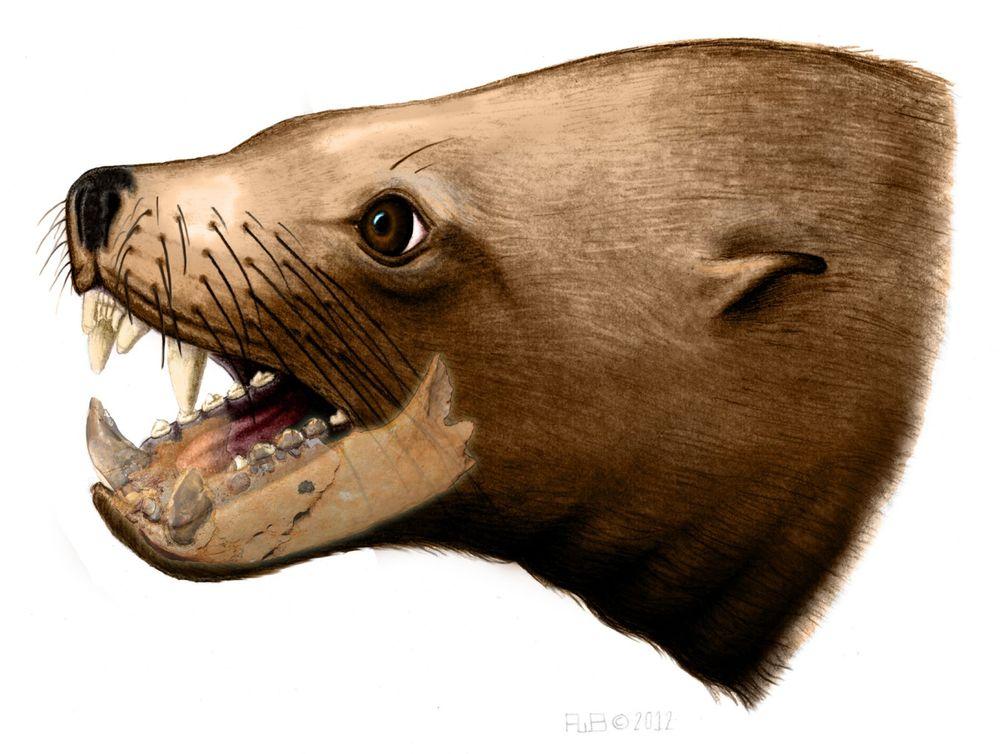 Killer Walrus
