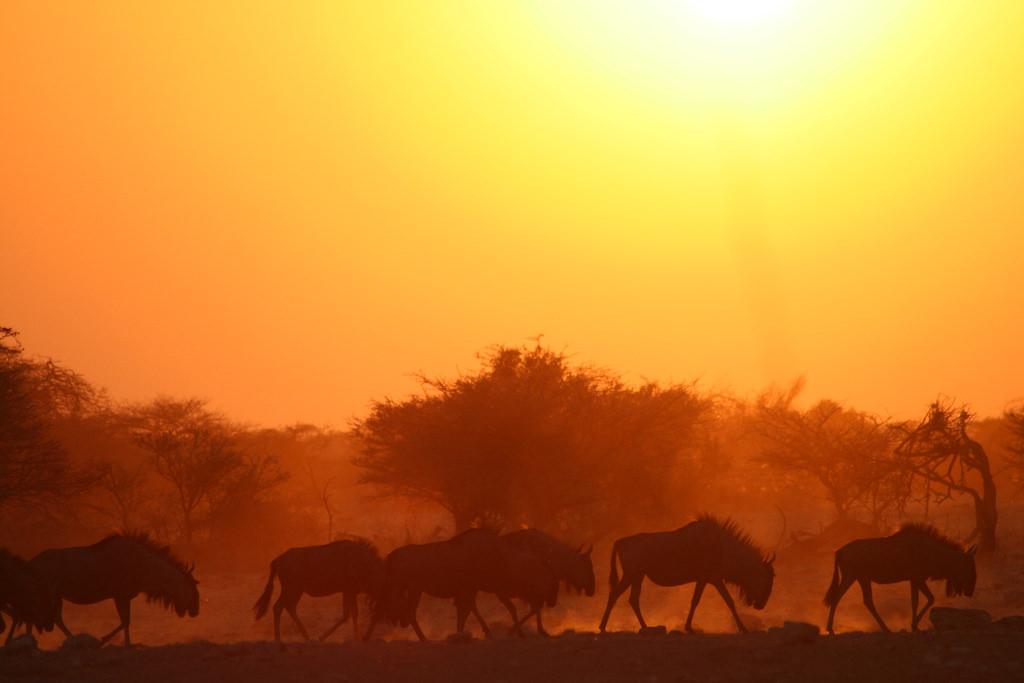 African heatwave