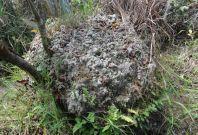 mystery mound south america