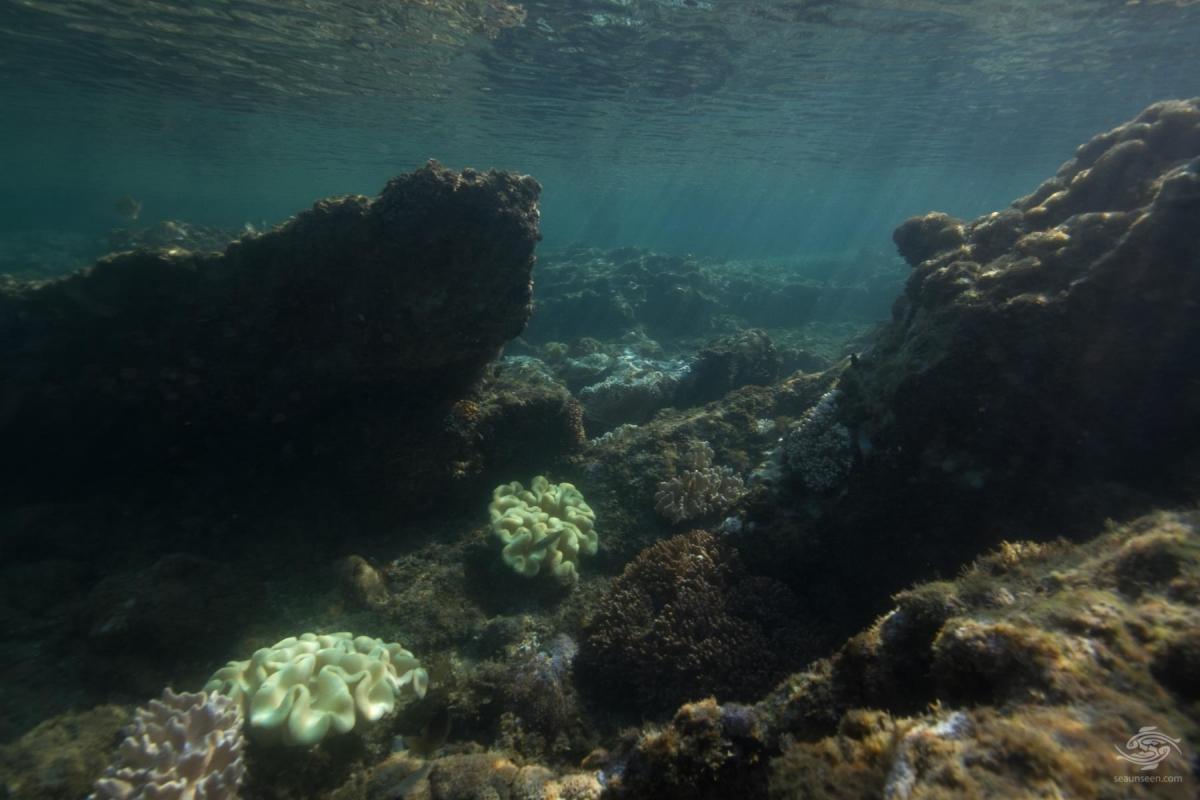 underwater city mafia island