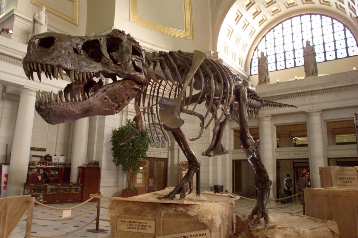 Sue the Tyrannosaurus Rex