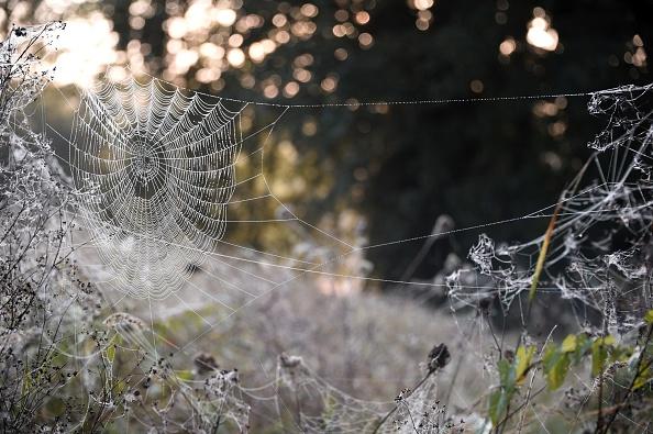 Spider web composite material