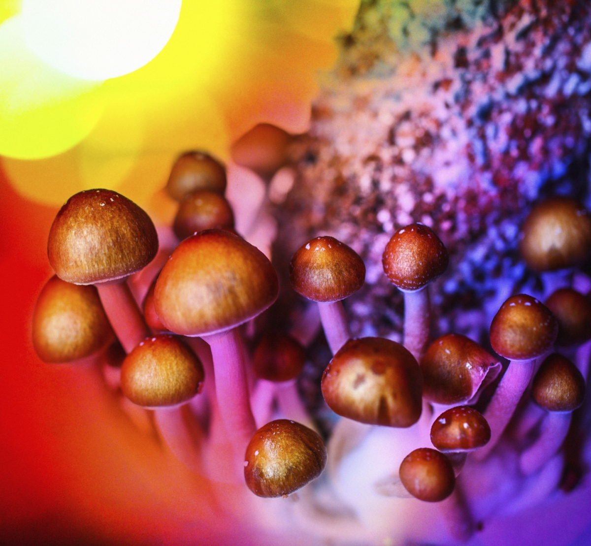 magic mushrooms depression