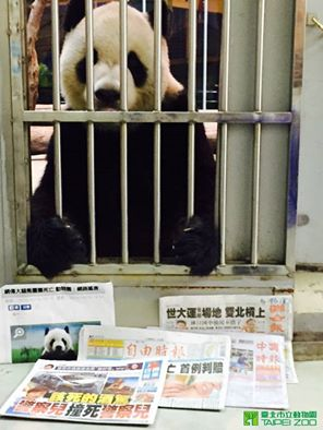 Taiwan panda hostage photo