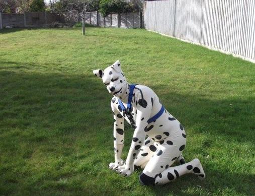 Mr Puppy winner Spot