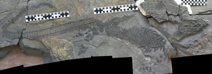 Reptile fossil evolution