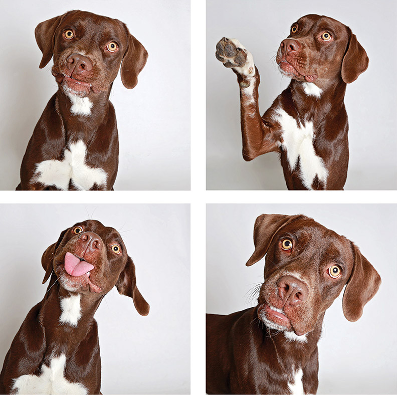 Shelter dogs in a photo booth