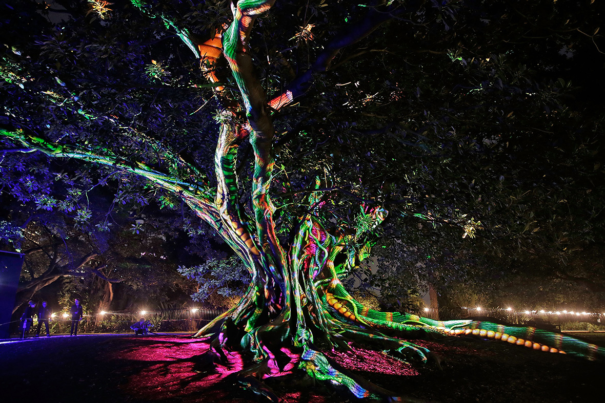 Elegant A Tree Is Illuminated During The Garden Of Light Display At The Royal  Botanic Gardens Brendon Thorne/ Getty Images Amazing Pictures
