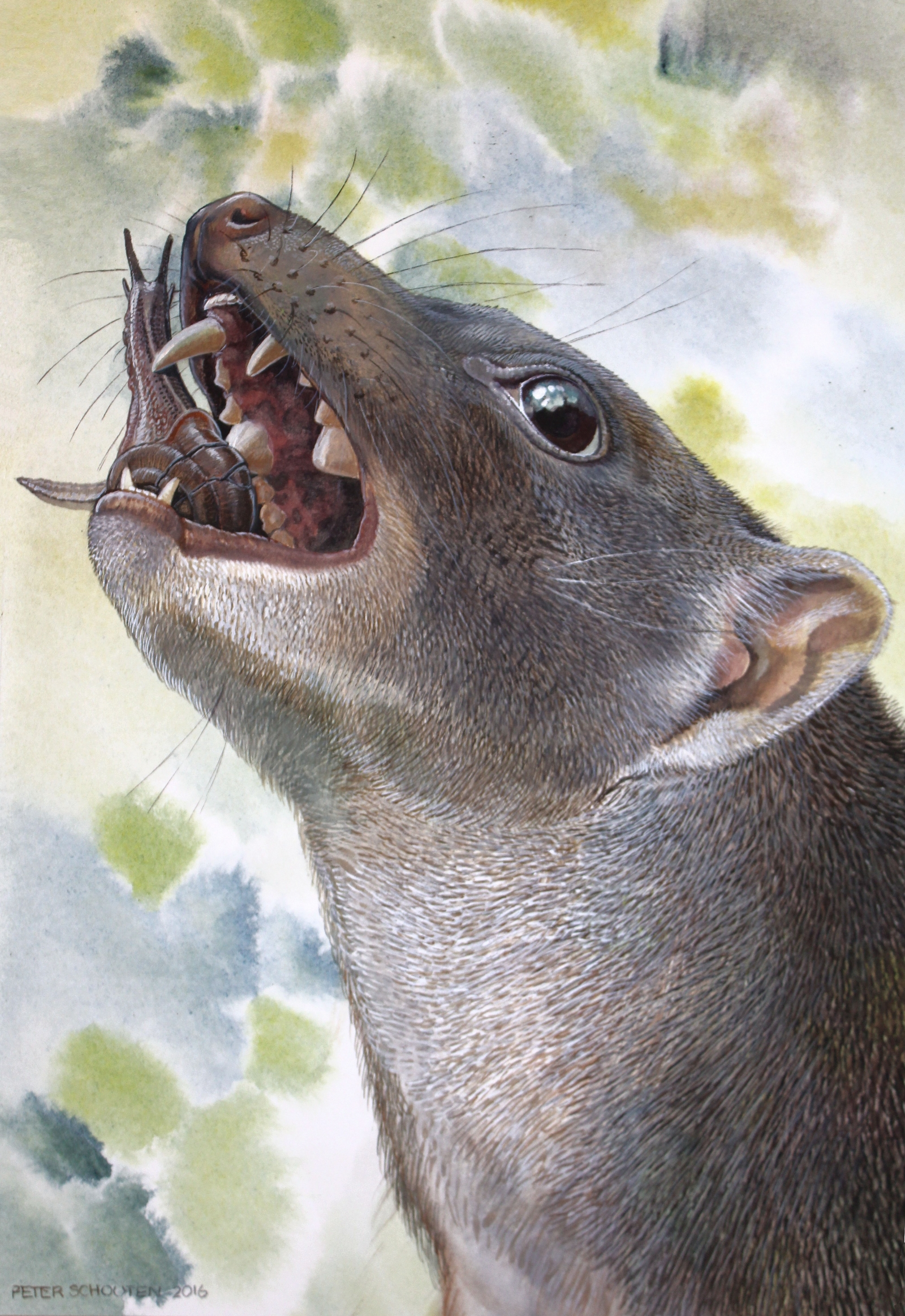 snail-eating marsupial