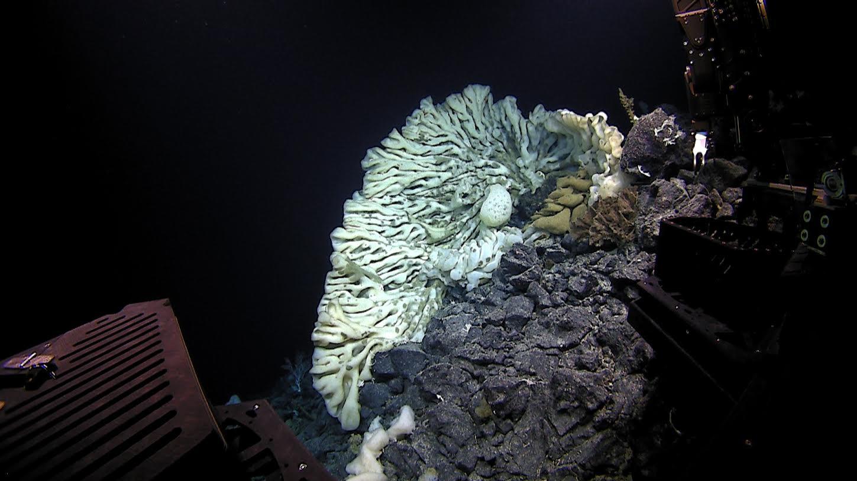 biggest sponge in the world