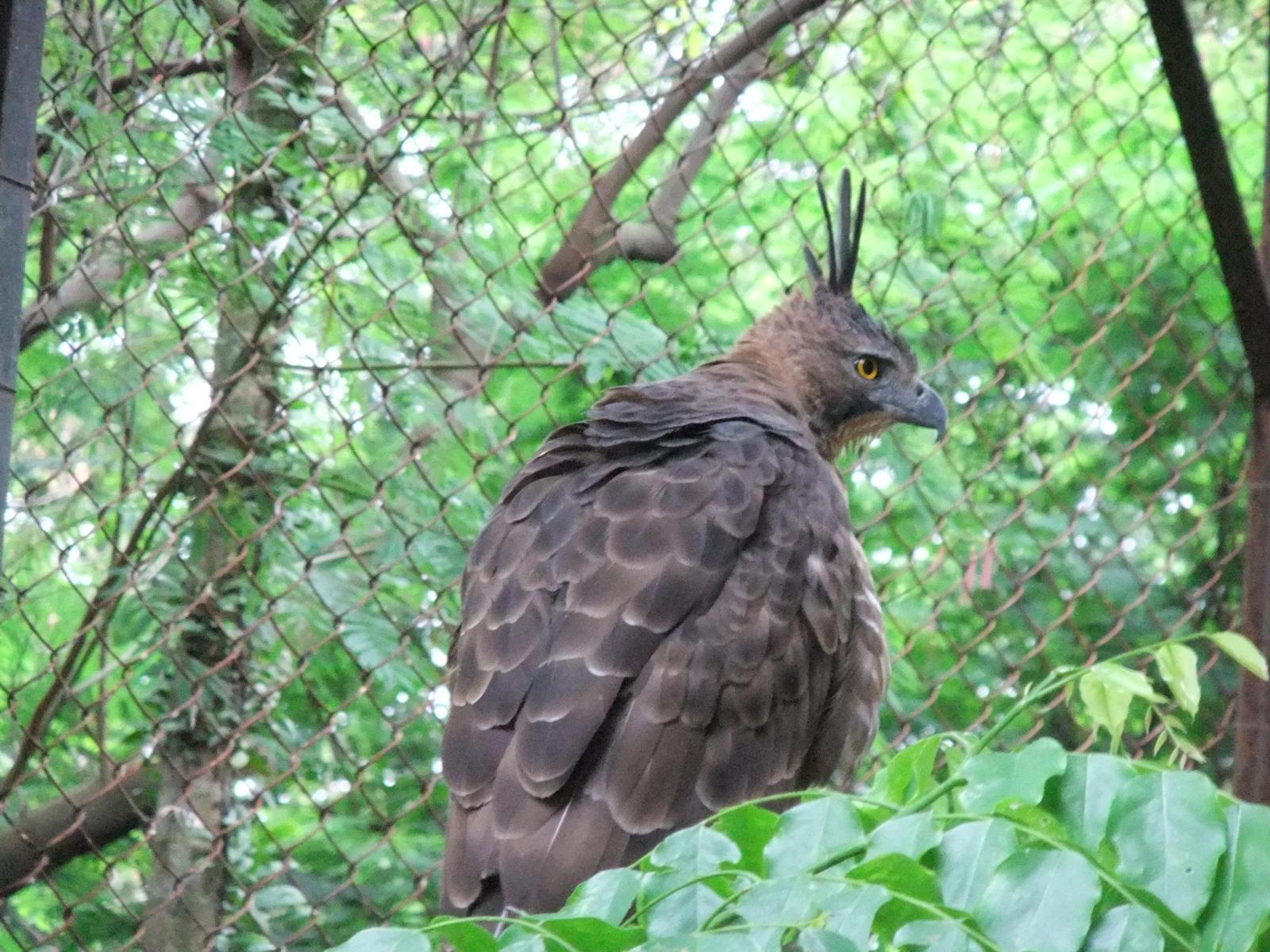Indonesia birds extinction