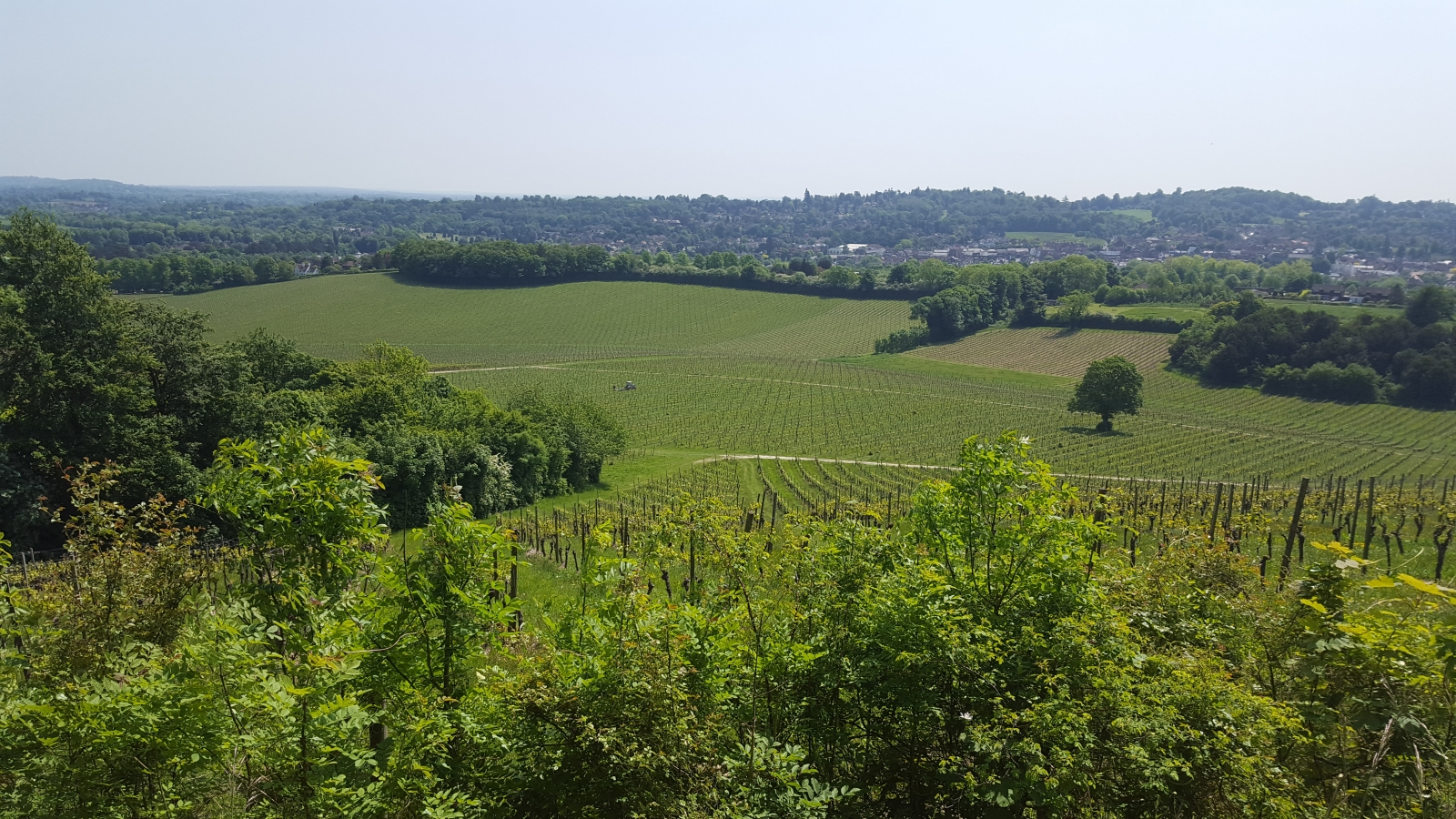 Dennbies vineyard