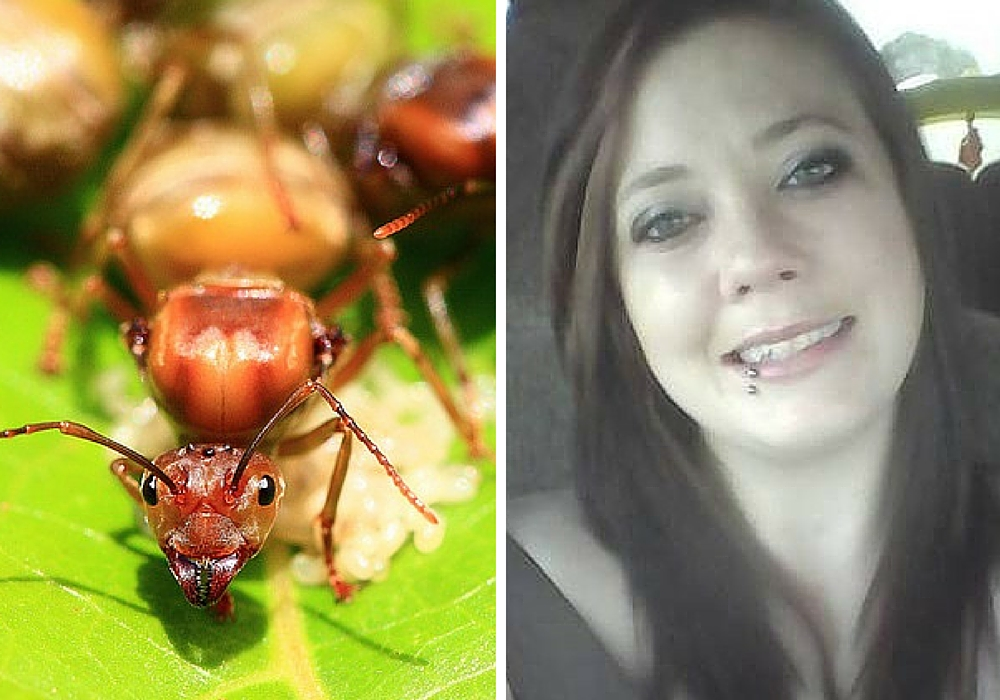 fire ant killers