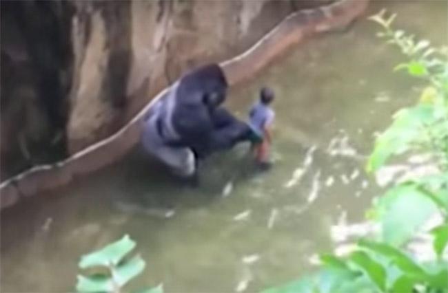 Cincinnatti Zoo gorilla enclosure