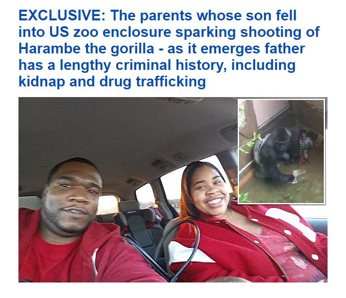 Daily Mail Harambe
