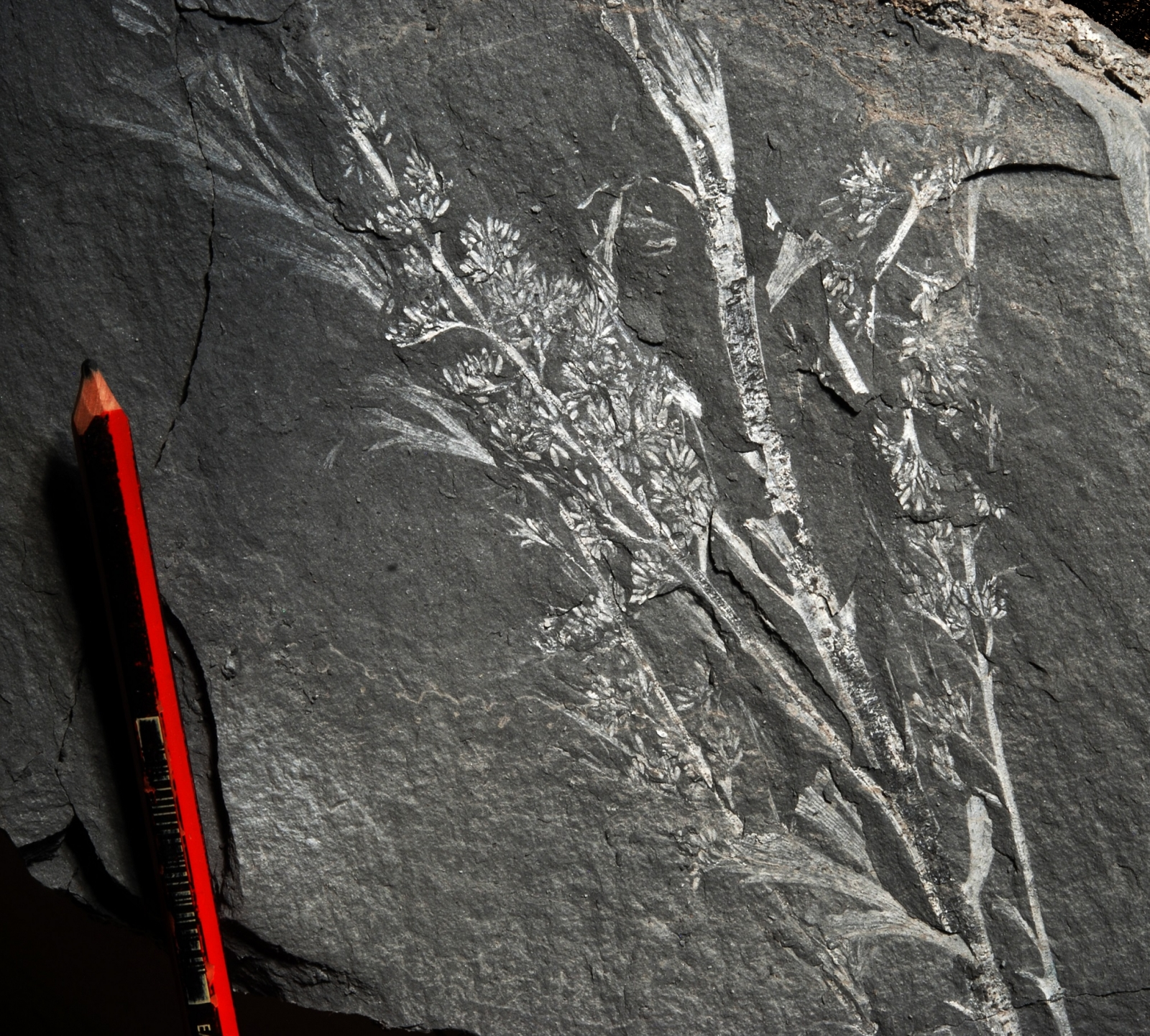 South Africa fossils