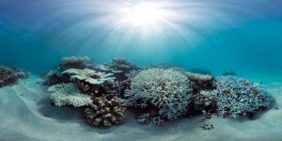 Maldives coral reefs