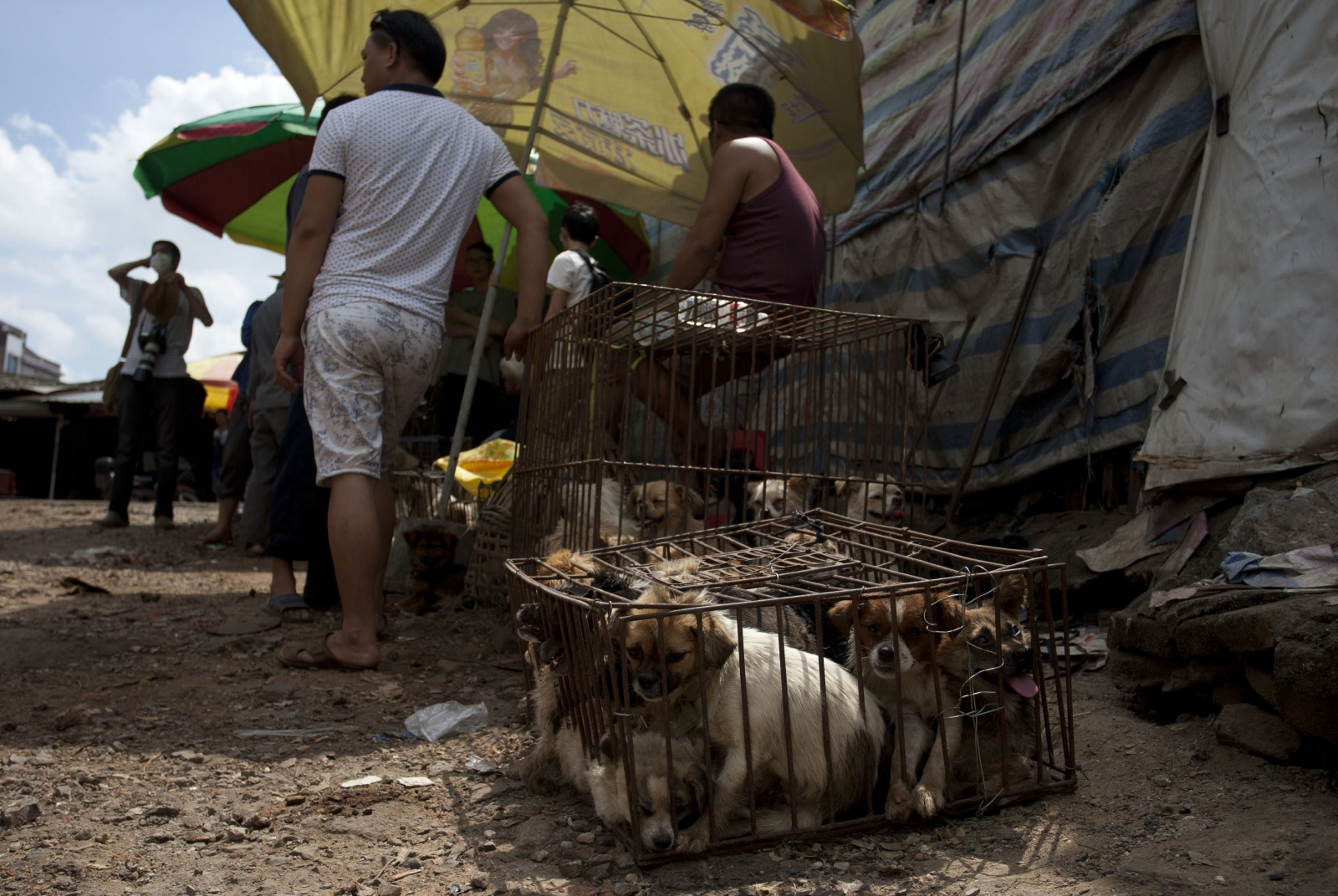 Yulin dog meat festivalSTR/AFP/Getty