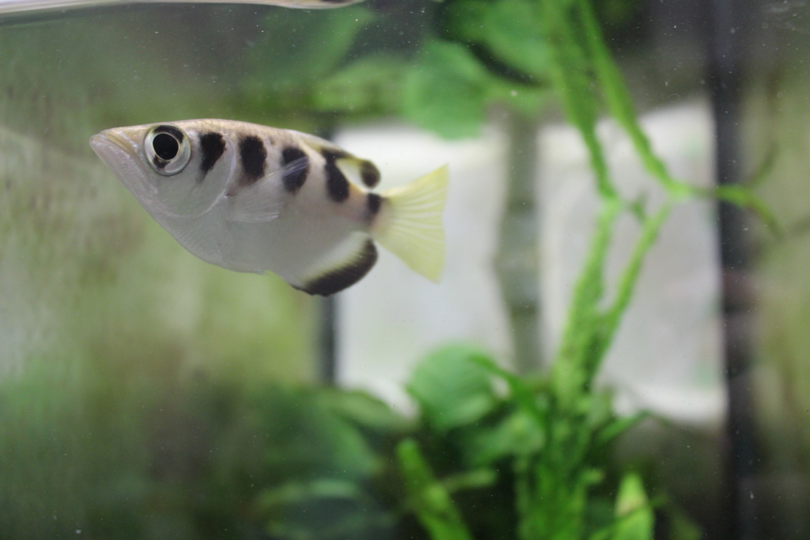archerfish spit at faces
