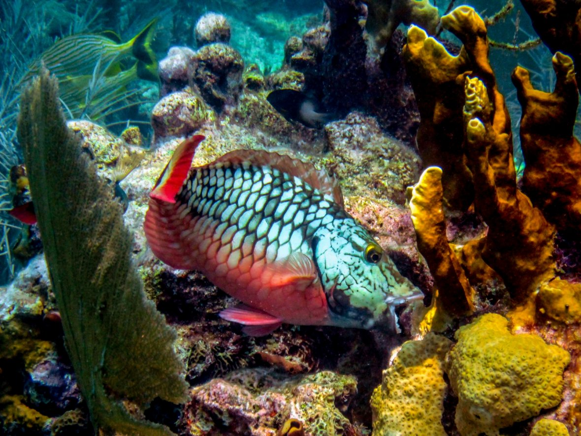 coral reefs mortality