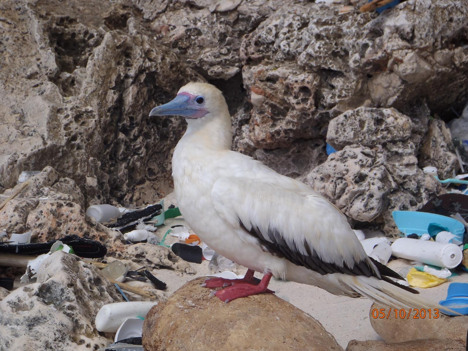world ocean day plastic pollution