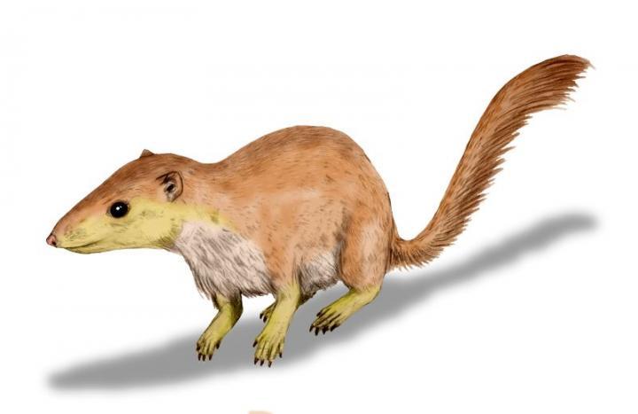 mammal diversity dinosaur extinction