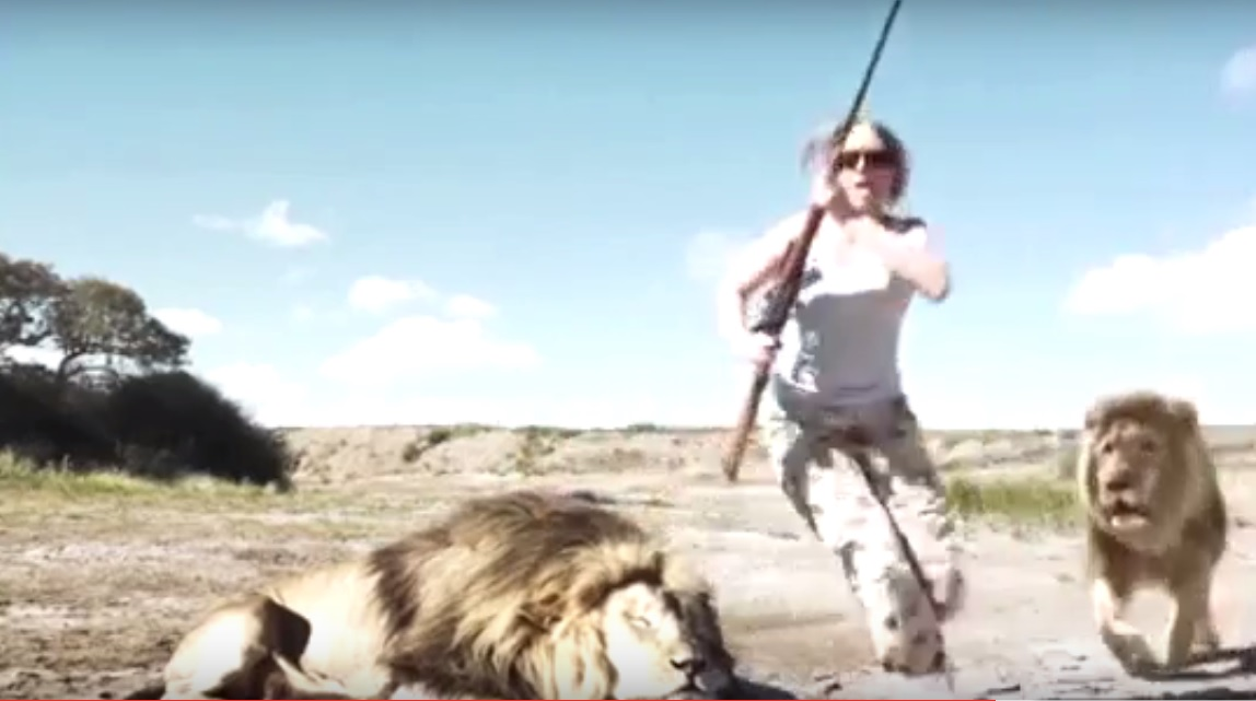 lion revenge south africa hunting