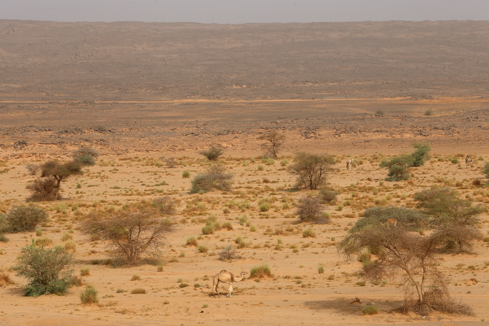 Niger migrants found dead in desert