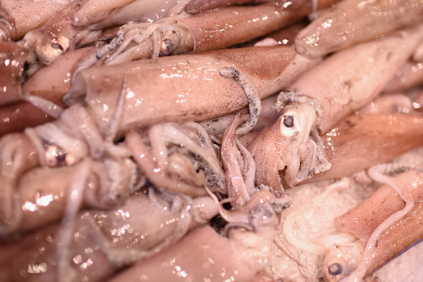 Squid at a fish market