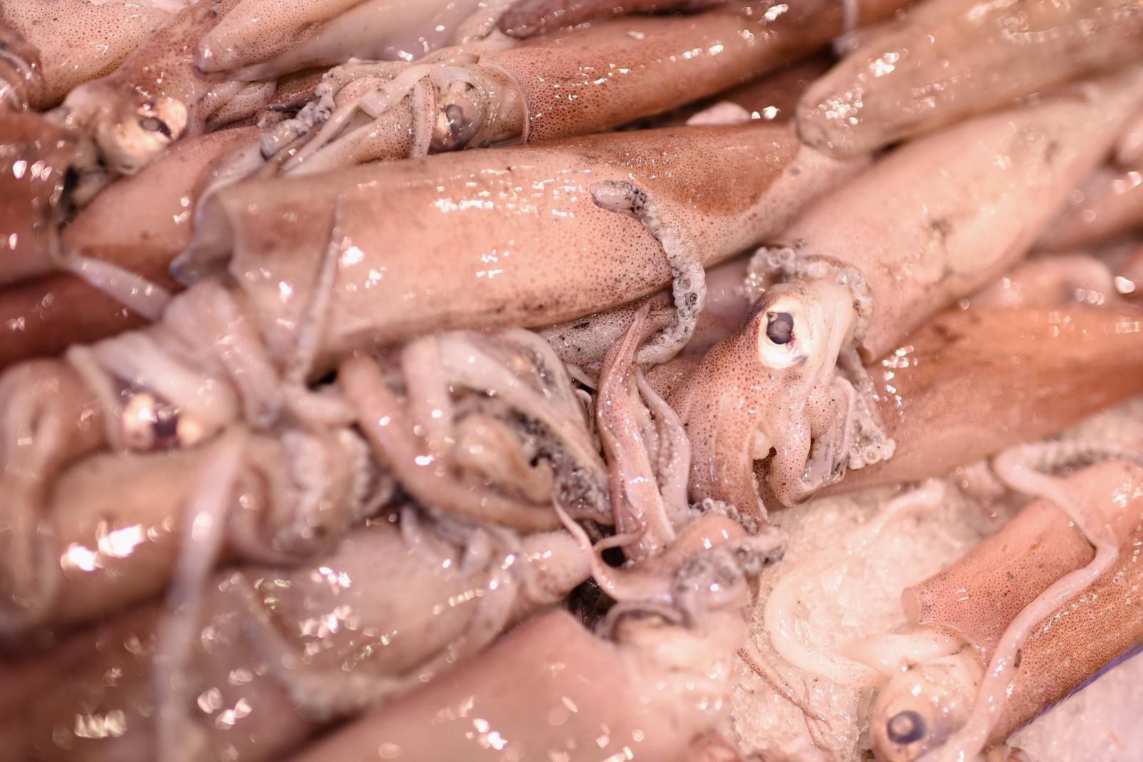 Squid at a fish market