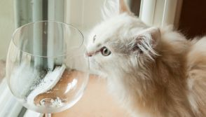wine for cats