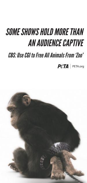 chimp ad