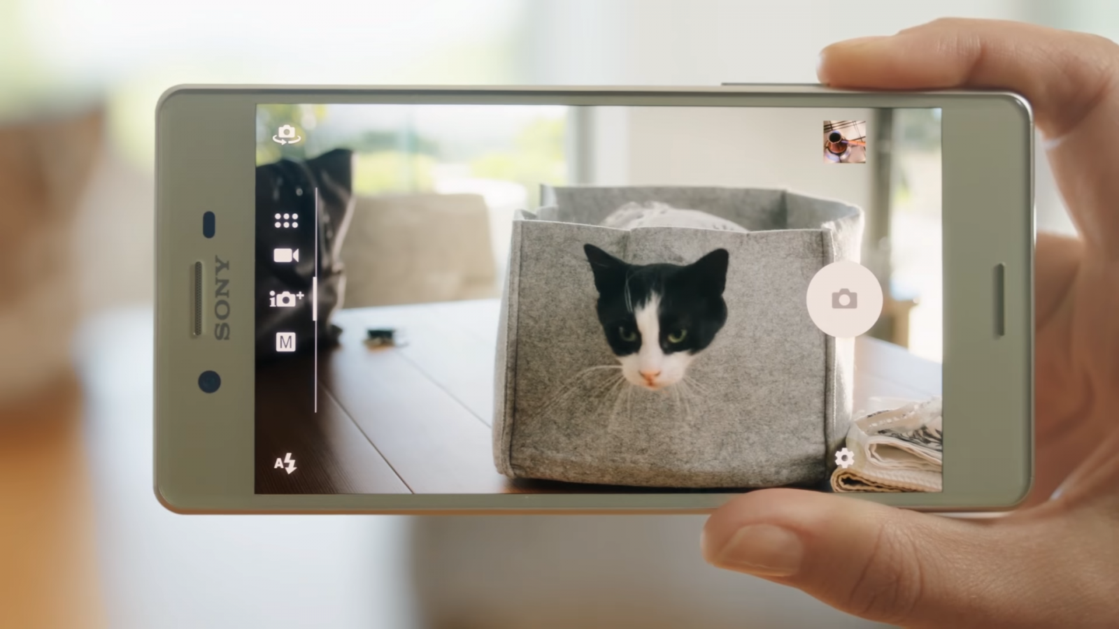 Sony Xperia X review camera cat