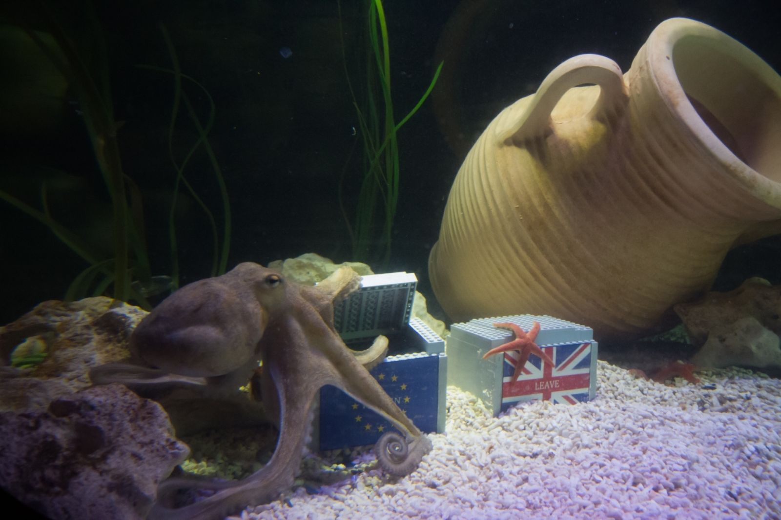 Otto the octopus at SeaLife Manchester