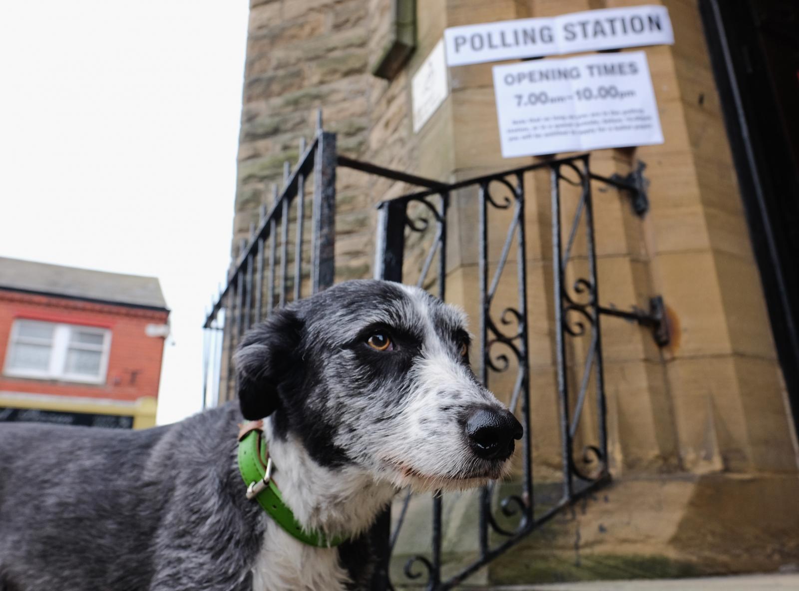EU referendum dog polling station