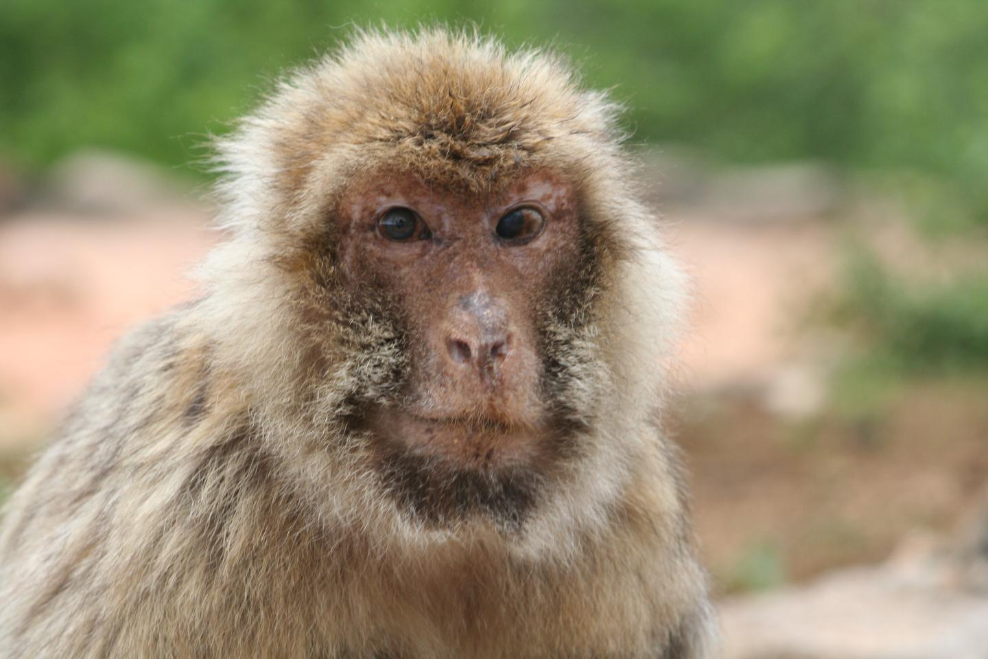 macaque social interactions
