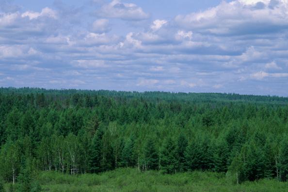 vegetation in Siberia
