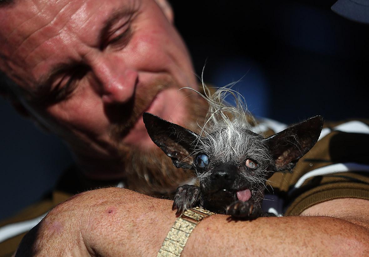 World's ugliest dog 2016