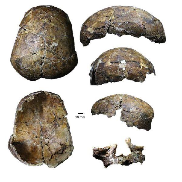 The Deep Skull