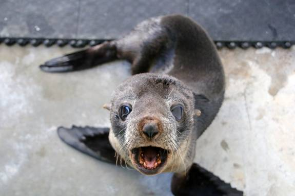 Australia storms: Sydney's wildlife hospital releases young seal into the wild