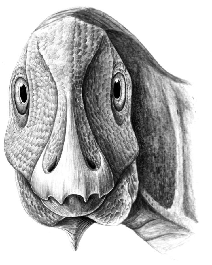 Telmatosaurus tumour face duck billed dinosaur
