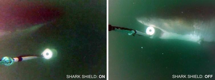 Shark Shield